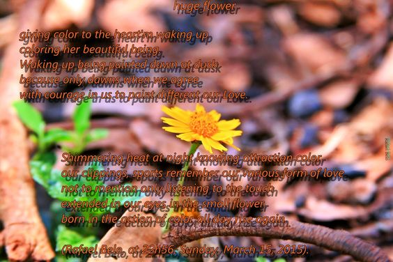 Olhares do avesso: Imensa flor (Huge flower) - poesia em imagem #Imensa #flor #coração #amor #recordar #acordar #ressuscitar #huge #flower #heart #waking #remember #love #riseagain #Inmenso #corazón #recuerde #despertar #elevar #riesig #blume #herz #liebe #denkenSiedaran #wachauf #zuerhöhen #巨大的 #花 #心脏 #爱 #还记得 #醒了 #养 #거대한 #꽃 #심장 #사랑 #인상 #일어나 #기억 #énorme #fleur #coeur #amour #souvenez-vous #réveillez-vous #levez #अमित #फूल #दिल #प्यार #बढ़ा #जागना #याद है #Immenso #fiore #cuore #amore…