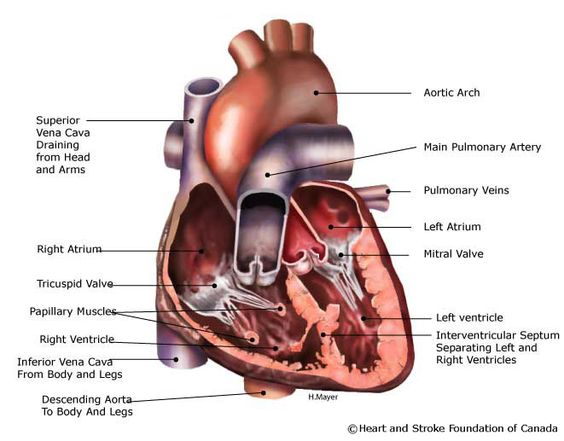 What would be some examples of medical procedures that requires surface anatomy knowledge?