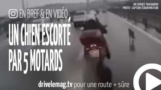 #VIDÉOBRÈVE Un #chien escorté par 5 #motards sur une #autoroute: Un chien errant sur l'autoroute, cinq motard sont… pour + d'infos/vidéo