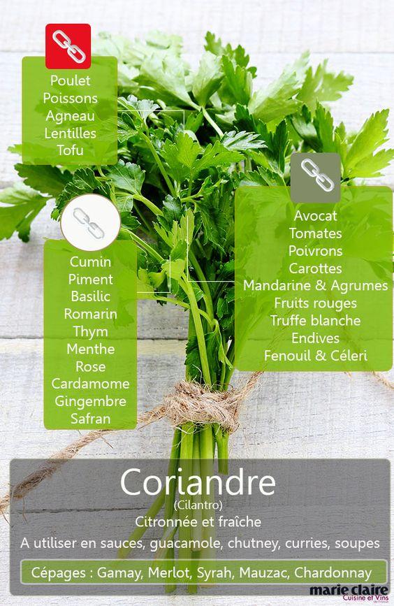 cilantro ou coriandre, savez-vous le cuisiner ?