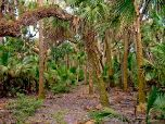 Hike the Florida National Scenic Trail
