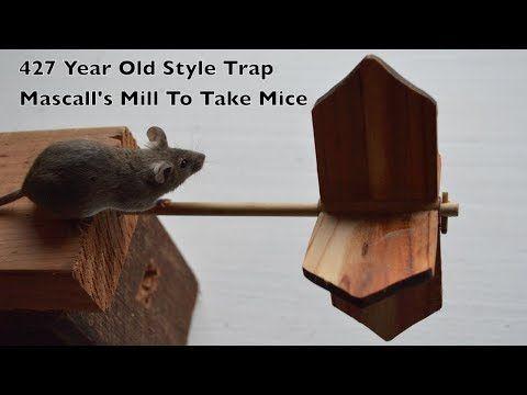 Pin On Traps