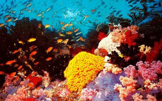 grande barrière de corail Australie paysage oceanie