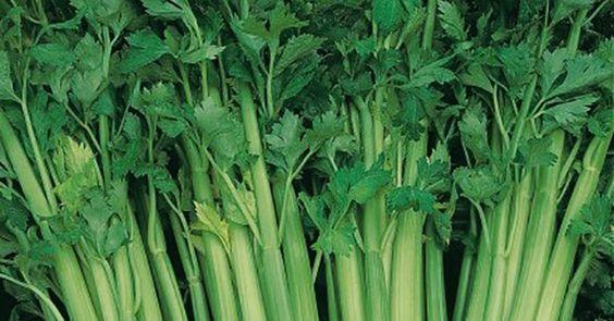 Le céleri branche: Remède naturel contre l'hypertension - Santé Nutrition