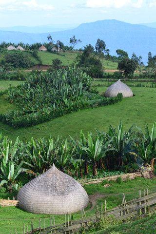 Ethiopia. Traditional Sidama houses/gardens: