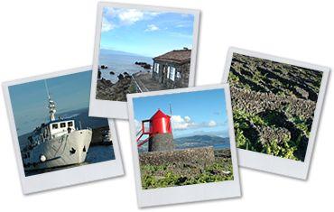 Adegas do Pico - Rural Tourism - Açores