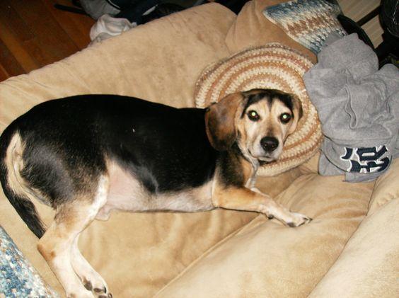 my dog August :)