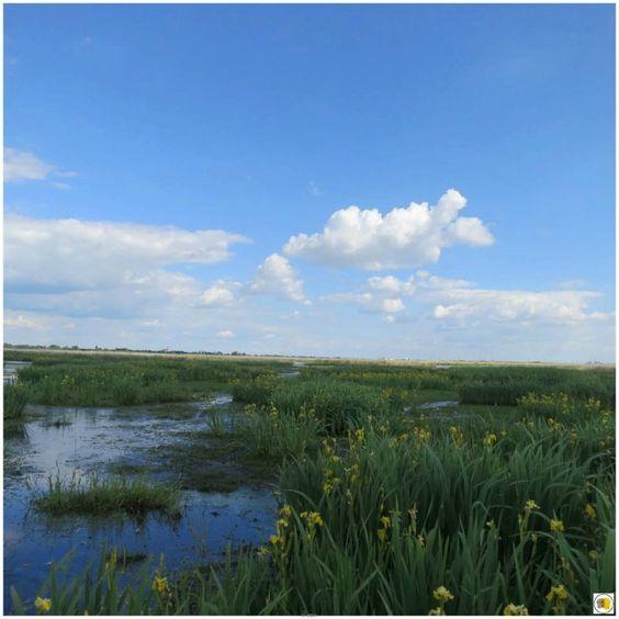 Parc naturel régional de Brière / La Mare aux Oiseaux - Saint-Joachim