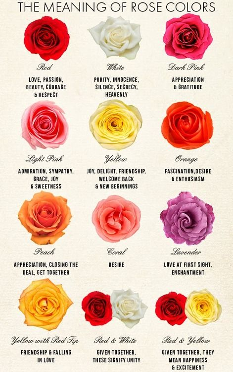 the meaning of rose colors planting pinterest be