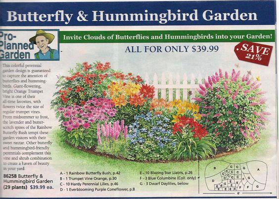 garden plan from michigan bulb co for a butterfly garden east garden
