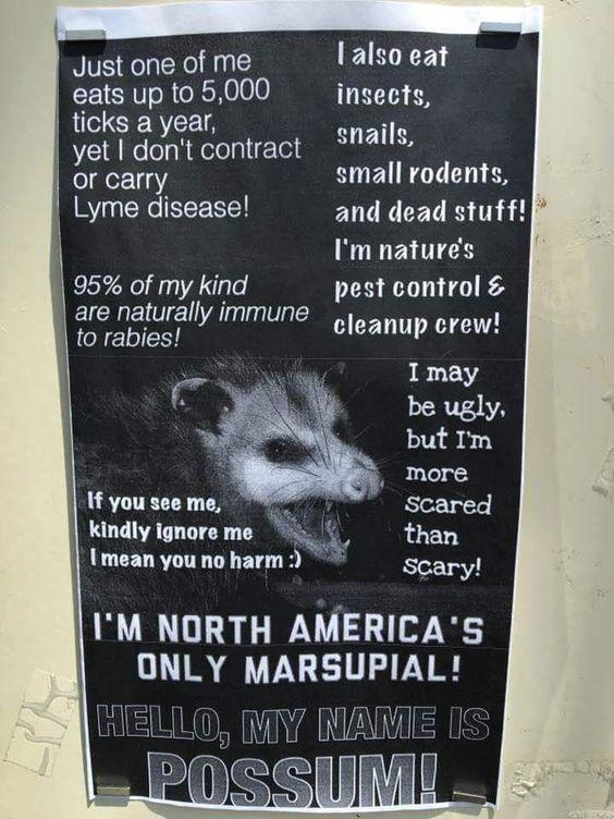 Possum is your friend
