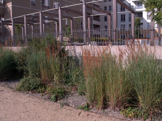 Das Goldbartgras (Sorghastrum nutans) als Hauptbestandsbildner in einer öffentlichen Parkanlage.