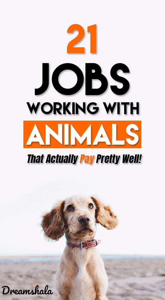 21 Coolest Jobs Working With Animals Jobs List For 2021 Work With Animals Jobs With Animals Job Work