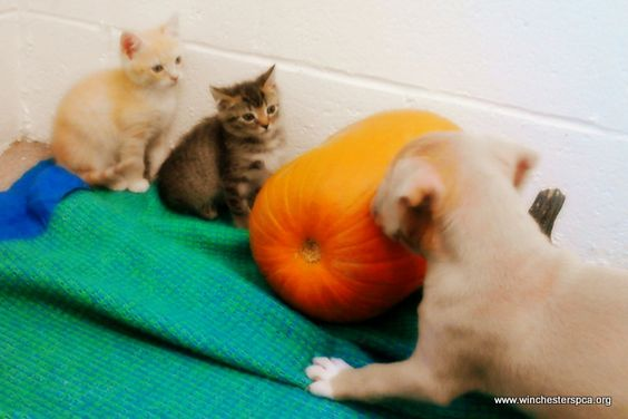 Kittens watching a puppy very, VERY carefully.