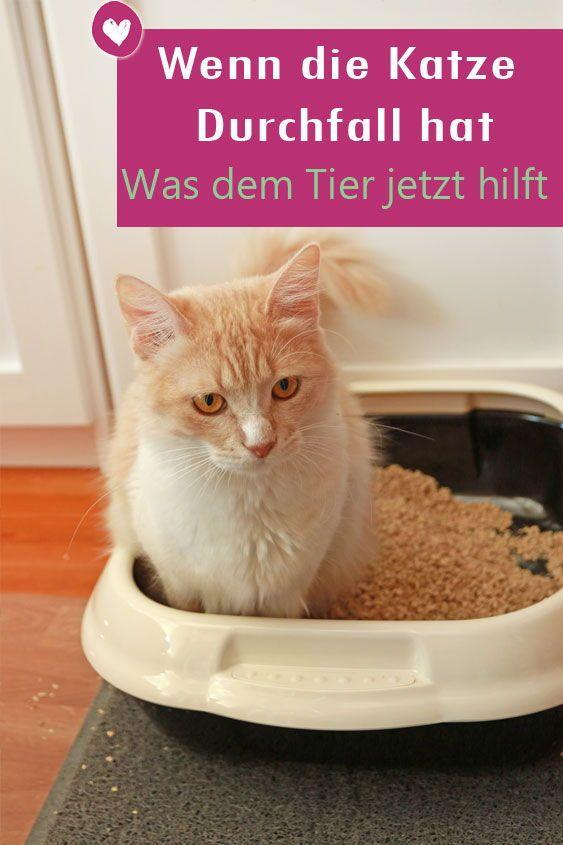 Durchfall Bei Der Katze Erkennen Und Richtig Behandeln Katze
