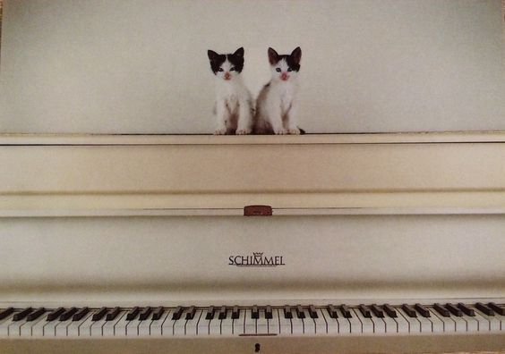 Postcard cats on piano www.artunlimited.com