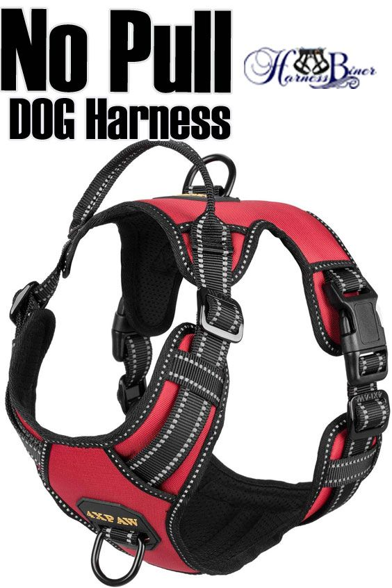 No Pull Dog Harness Worry Free 12 Months 4xpaw Always Stand