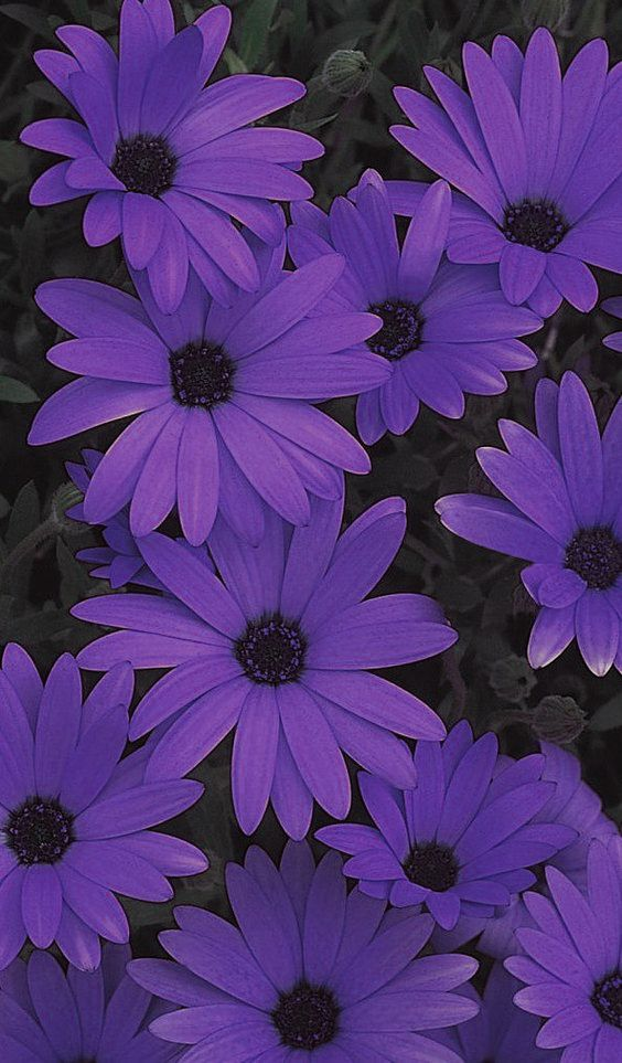 Pin By Teresa Hughes On Origins Purple Aesthetic Purple Wallpaper Violet Aesthetic Don't kill flowers growing inside of you for someone who don't appreciate the way you bloom. purple aesthetic purple wallpaper