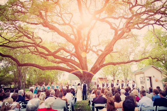 except without the buildings and with things hanging from the tree.....a DIY wedding is starting to sound sooo much better than disney. although wouldn't mind a disney proposal ;): Tree Wedding, Wedding Ideas, Dream Wedding, Wedding Dream, Outdoor Weddings, Oak Tree