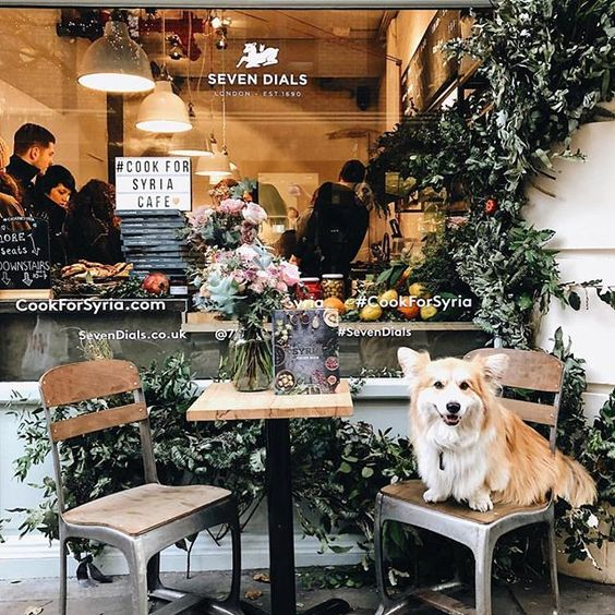Cook for Syria, London 📷@lukecabrahams Marcel @lecorgi visiting @cookforsyria pop-up in Seven Dials that is donating all proceeds to children suffering from the conflict in Syria. Run by volunteers and donations Cook for Syria Cafe is part of the 'supper-club that became a global movement' initiative. #popup #sharingaworldofshops