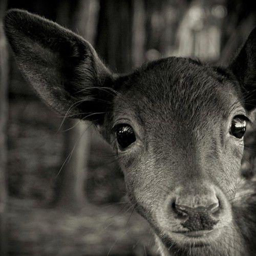 Oh my deer!