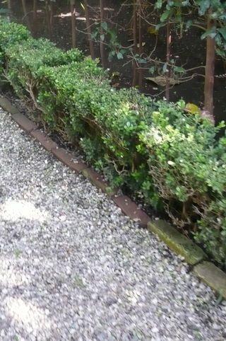 Brick border for gravel path