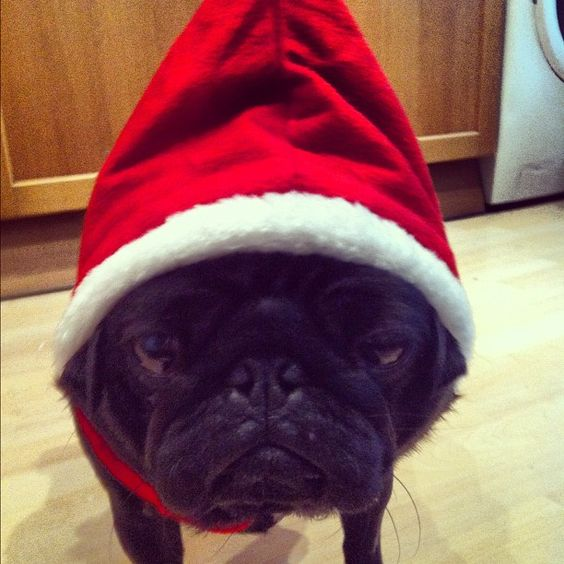 Mr Brady Boo is excited for Christmas, not long now !