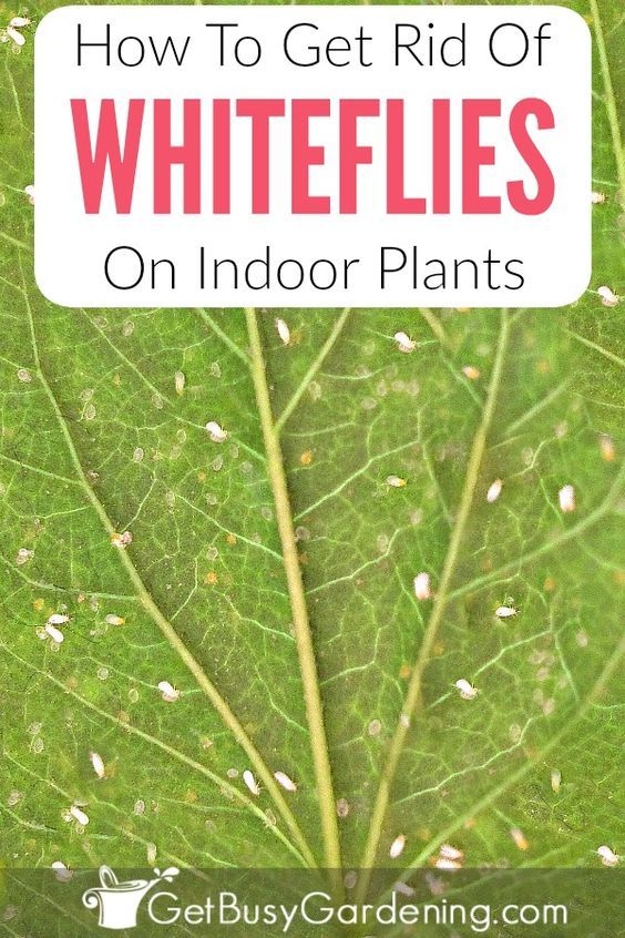 How To Get Rid Of White Bugs In Soil