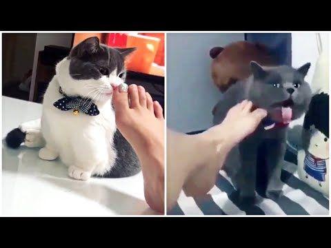 مقاطع تجميعية مضحكة للقطط 2020 الضحك حتى البكاء Youtube Cats Cats Smelling Monkeys Funny
