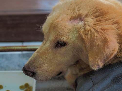 9 Most Common Neurological Problems In Dogs Dogs Tumors On Dogs