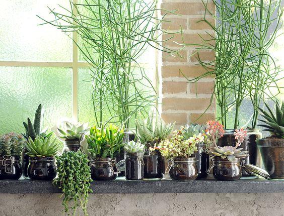 Tout savoir sur la succulente recherche plantes grasses for Plante appartement