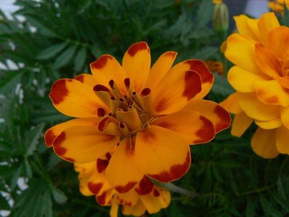 Bluetezeit Lenz Gelbe Bluete Blume Bluetenblaetter2