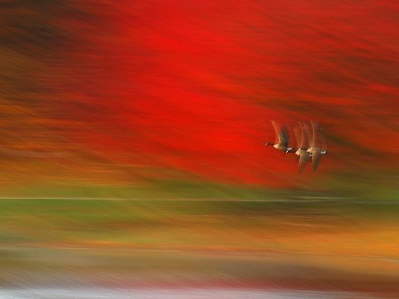 Autumn Art by YG Low, via Flickr