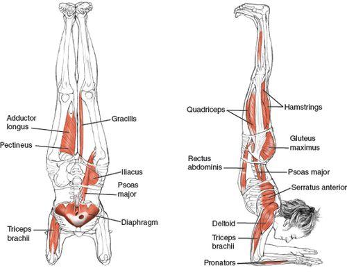 Yoga Postura Pincha Mayurasana