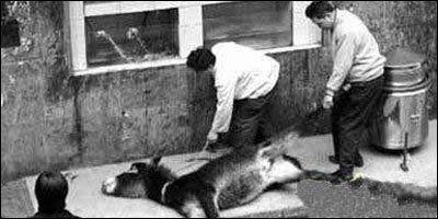 Petition · People for the Ethical Treatment of Animals (PETA): China: Huo Jia Lu, uma das especiarias mais cruéis que existe · Change.org