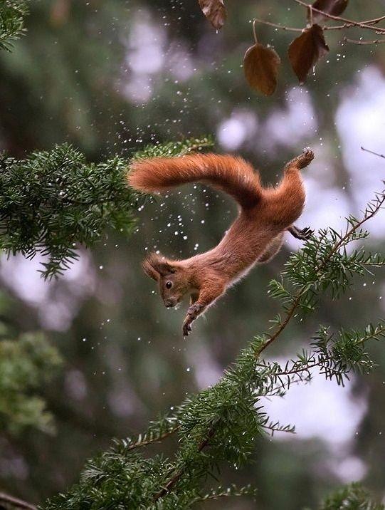 "beautiful-wildlife: ""Squirrel by © Sergey Polyushko """