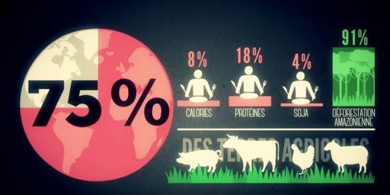 Mangiamo troppa carne: tutti gli effetti collaterali su salute e ambiente in un…