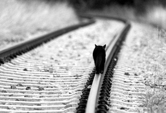Caminando.. Walking..