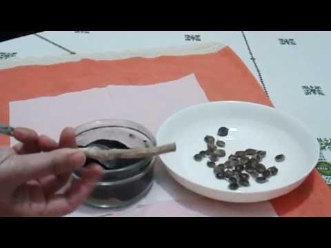 وصفة صحراوية لتبييض الأسنان Tableware Plates Kitchen