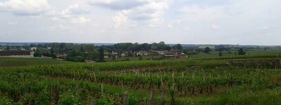 vignoble de Vougeot (21à