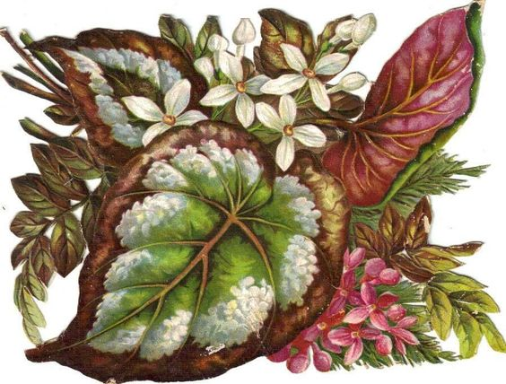 Larger Victorian Die Cut Scrap Florals & Coleus Leaves c1880: