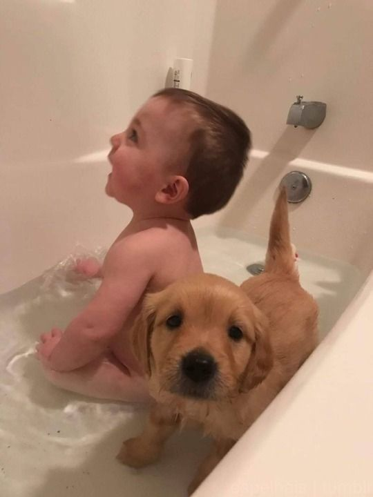 Bath Buddies Puppy S Dogs Cute Funny Animals Cute Dogs Cute