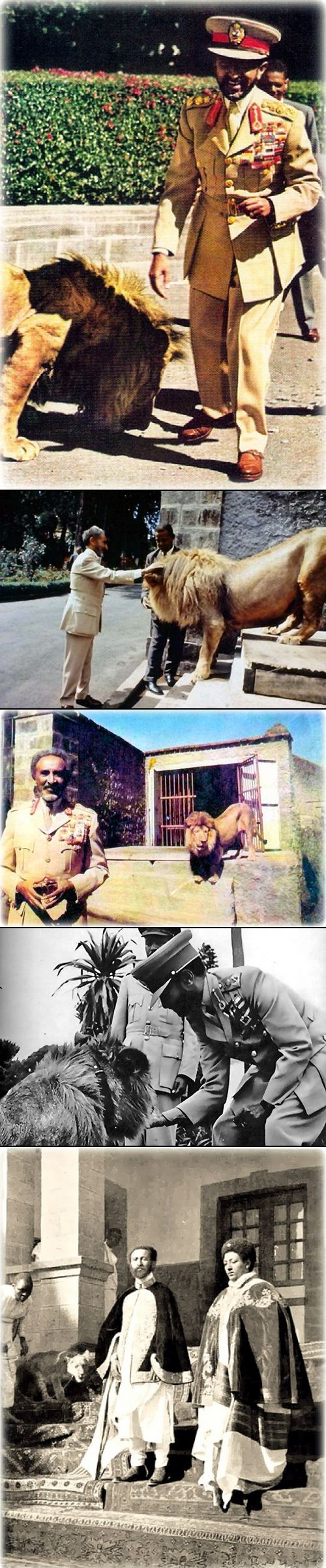 AFRICA'S LAST Ethiopian Emperor Haile Selassie I with his Lions. The lion is considered as Ethiopia's national animal and can be seen on various national artifacts such as the Ethiopian Lion of Judah flag and Ethiopian Airline.