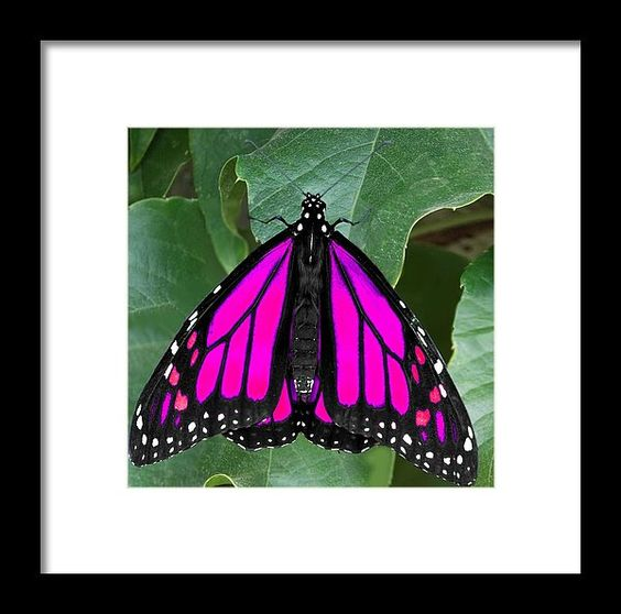 Fantasy Framed Print featuring the photograph Purple Monarch by Trinket's Legacy