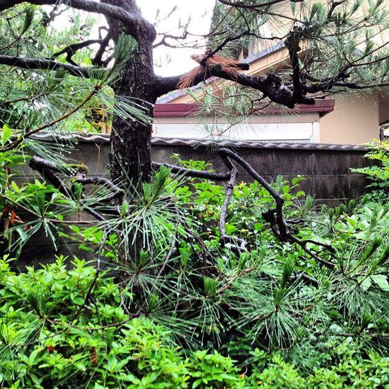裏庭の草木が伸び放題だわ - @effect_kita- #webstagram
