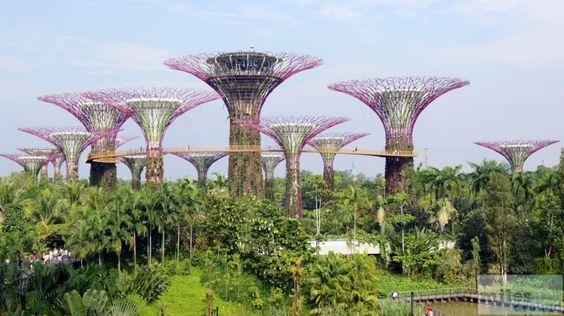 Supertree Grove - Check more at https://www.miles-around.de/asien/singapur/gardens-by-the-bay-und-lichtshow-wonderfull/,  #Essen #GardensbytheBay #MarinaBaySands #Natur #Reisebericht #Singapur #Wonderfull
