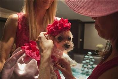 Wanted: A groom for dying celebrity pooch (Allison Joyce  /  REUTERS)
