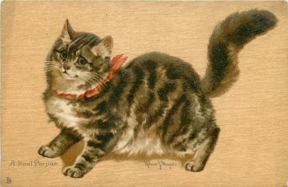 """""""A Real Persian"""" ~ 1904 Cat postcard illustrated by Helena J. Maguire."""