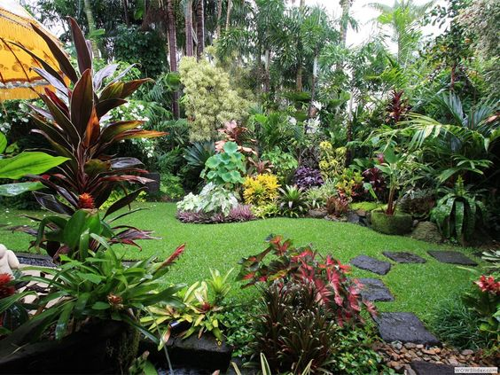 Dennis hundscheidt 39 s tropical garden queensland superb for Courtyard landscaping brisbane