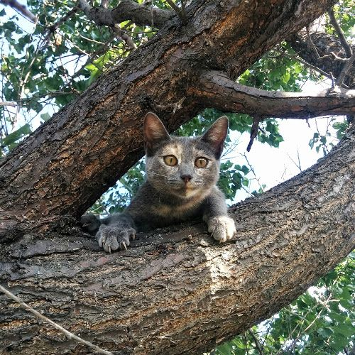 My little predator by Ivan Polyakov - Animals - Cats Playing ( cats, cat, tree…